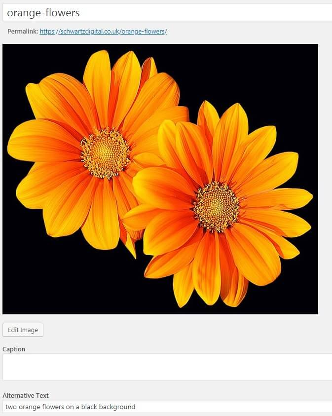 optimised images in wordpress